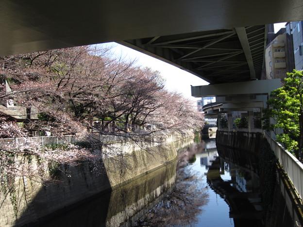 13.03.19.江戸川1(文京区)