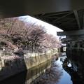 Photos: 13.03.19.江戸川1(文京区)