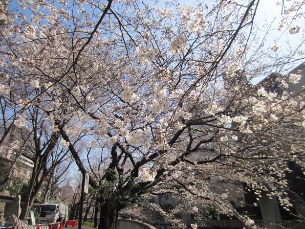 13.03.19.江戸川2(文京区)
