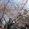 Photos: 13.03.19.江戸川2(文京区)