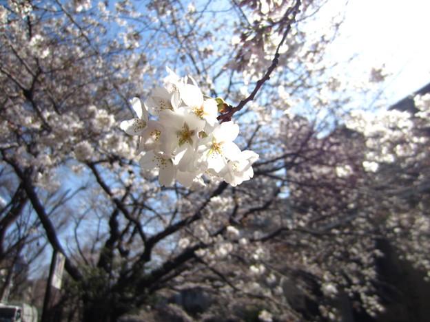 13.03.19.江戸川3(文京区)