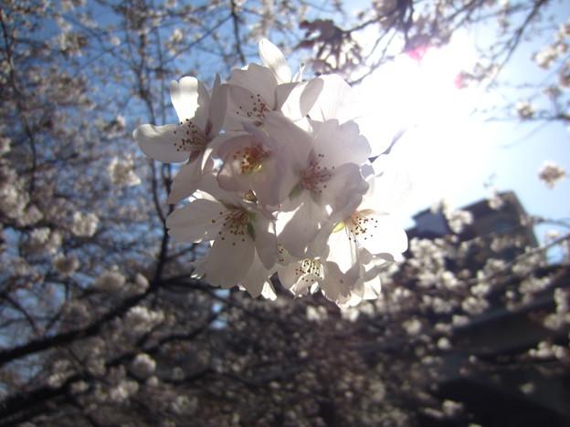 Photos: 13.03.19.江戸川4(文京区)