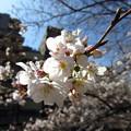Photos: 13.03.19.江戸川5(文京区)