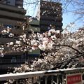 Photos: 13.03.19.江戸川6(文京区)