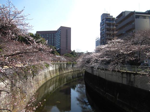 13.03.19.江戸川7(文京区)駒塚橋より東