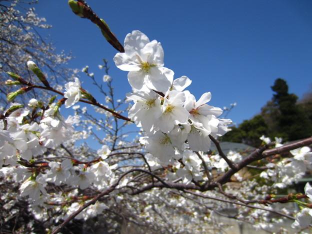 13.03.19.江戸川8(文京区)