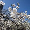 Photos: 13.03.19.江戸川9(文京区)