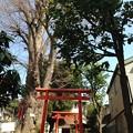 豊川稲荷2(文京区目白台1)