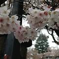 Photos: 新井薬師(中野区)2