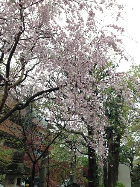 Photos: 北野神社(新井天神)3