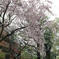 北野神社(新井天神)3