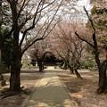 Photos: 13.04.05.勝願寺(鴻巣市)5