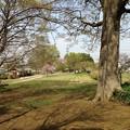 13.04.05.石田堤史跡公園。ガード北側、北。