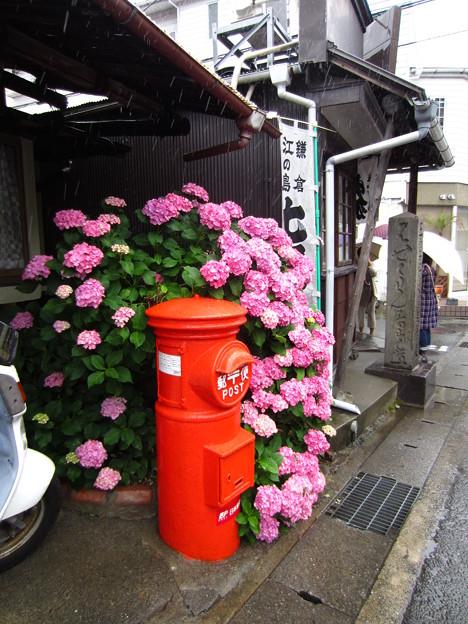 力餅家(鎌倉市)・名物ポスト・紫陽花1