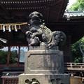 Photos: 荏原神社(北品川)の狛犬・阿。
