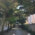慈眼寺参道(東側、山門。千住1)