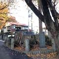 御社八幡神社 神木(元八王子町3)