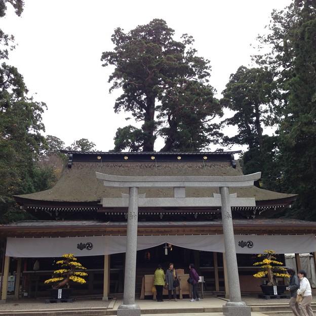鹿島神宮 拝殿
