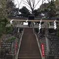 Photos: 品川神社(北品川3丁目)
