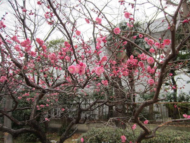 14.02.13.花王東京工場(すみだ工場)外周部