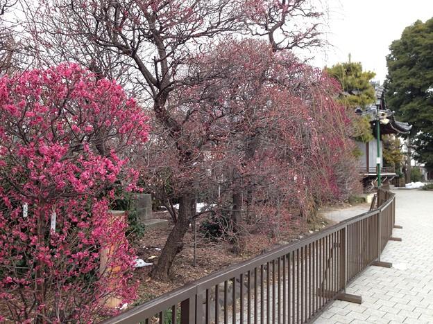 14.02.13.小村井香取神社(香梅園。墨田区文花)