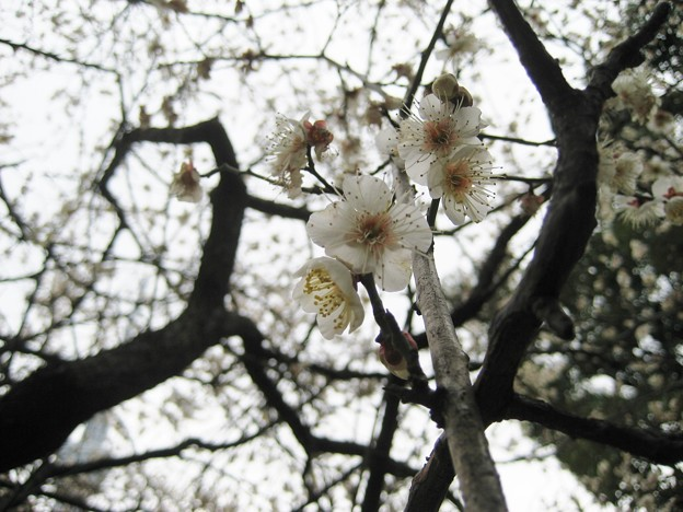 14.02.23.墨田区立隅田公園(向島)