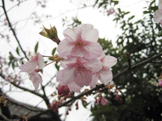 14.02.23.牛嶋神社(向島)
