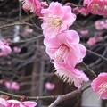 14.02.27.北野神社(牛天神。文京区春日)