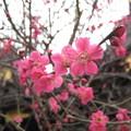Photos: 14.02.27.北野神社(牛天神。文京区春日)