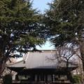 Photos: 寛永寺(上野桜木)