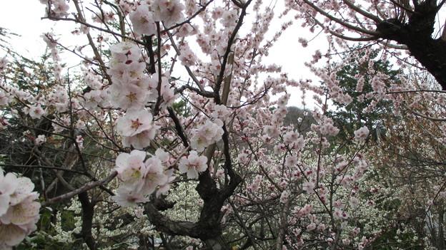 14.03.27.善光寺(甲府市)