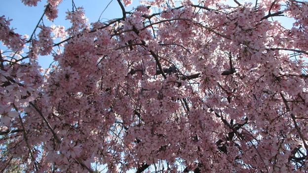 14.03.31.代官町通り(千代田区北の丸公園)