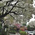 Photos: 14.04.03.白山神社(文京区白山)