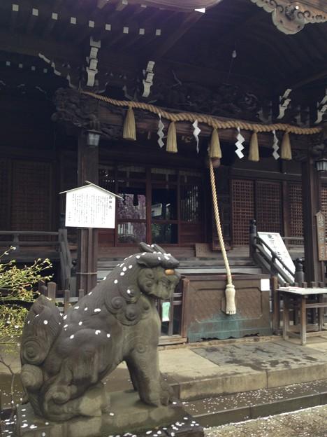 白山神社(文京区白山)