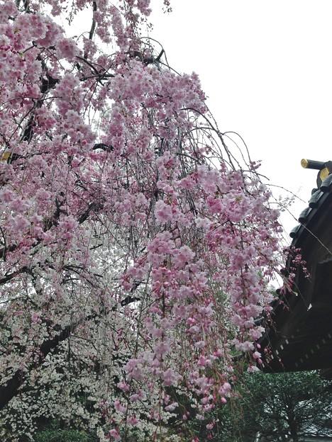 14.04.03.白山神社(文京区白山)
