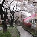 Photos: 14.04.03.播磨坂(文京区小石川)松平播磨守上屋敷跡