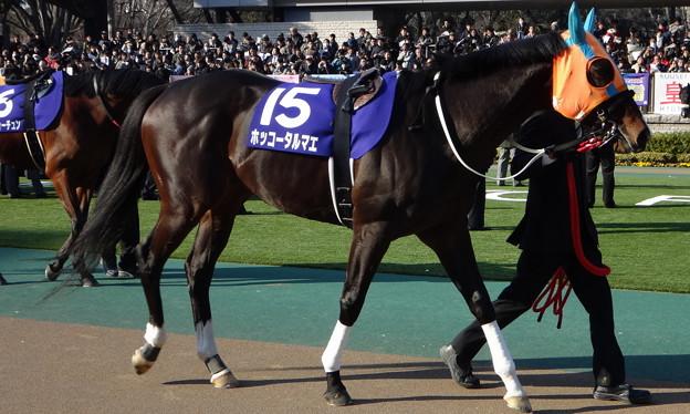 ホッコータルマエ(1回東京8日 11R 第31回 フェブラリーステークス(GI)出走馬)