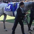 Photos: ゴールドシップ(5回中山8日 10R 第58回グランプリ 有馬記念(GI)出走馬)