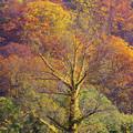 写真: 極彩色の枯木