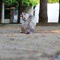 Photos: きれいきれいする・・・野良猫。
