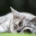 Photos: とにかく寝る・・・野良猫。