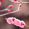 Photos: 早春~目覚め~