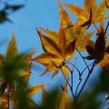 ~秋の気配~