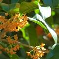 写真: ~秋のかほり~