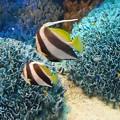 ~珊瑚の海で~