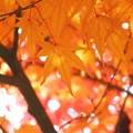 ~秋を重ねて~