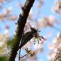 Photos: ~sakura-kogera~
