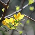 Photos: ~春LaLaLa~