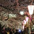 ~かまぼこ桜祭~