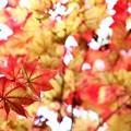 ~秋色ロンド~